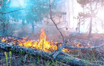 UFD conducts Workshop on forest fire prevention and management