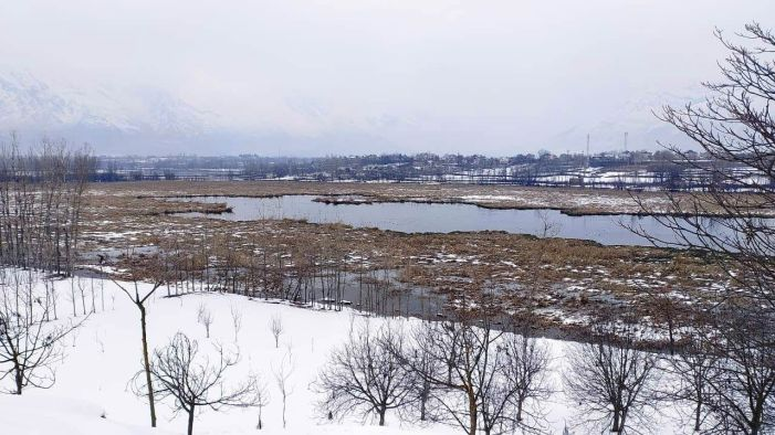 No bird flu reported in migratory birds in Pampore wetlands : Block officer wetlands