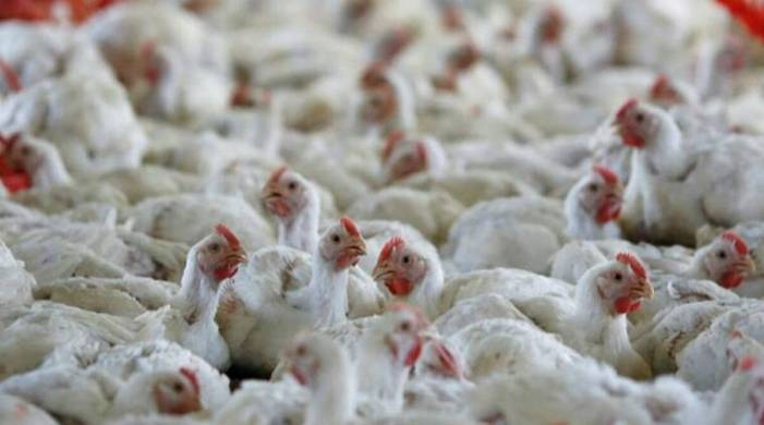 Bird flu outbreak confirmed in 10 states so far: Govt