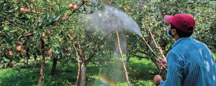 Orchardists adopting fertilizer management get better yield