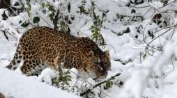 Human-wildlife conflict can no longer be neglected