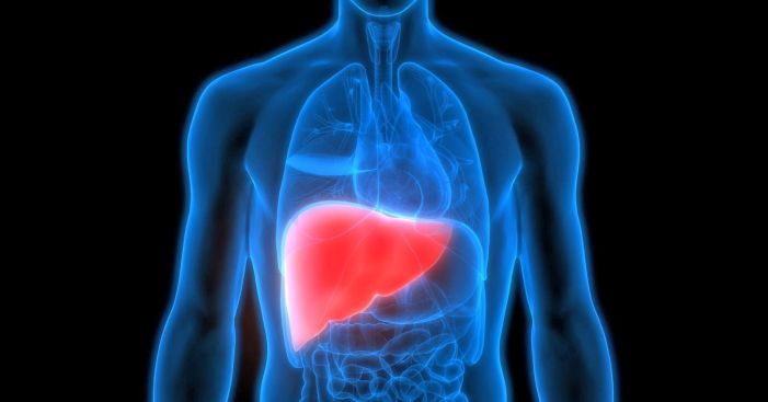 Fatty Liver Disease from Consumption of Soft Drinks