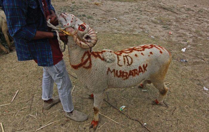 Rajasthani animal traders find greener pastures in Kashmir