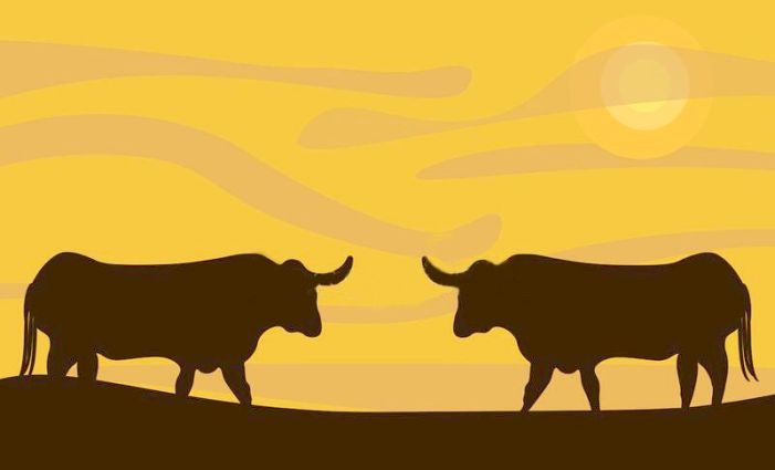 The Bull Who Wanted to Fight