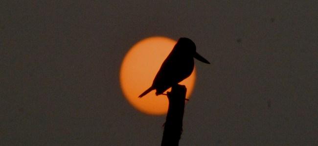 The last sunset of 2018 captured in Srinagar on Monday   -KV Photo