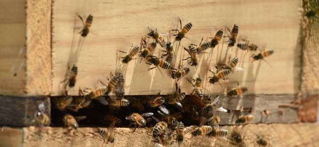 350 tons honey produced in Valley this year: Officials