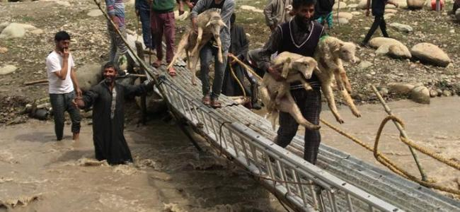 Shepherds, 500 sheeps rescued from Nallah Badipora in Budgam