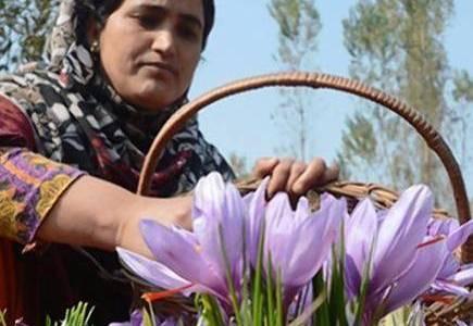 Saffron trading goes on-line in Kashmir