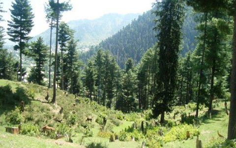 Forest Rights Act being implemented in J&K
