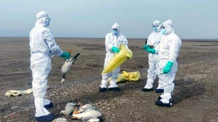 Birds die mysteriously in Rajouri, authorities to collect samples for Bird Flu
