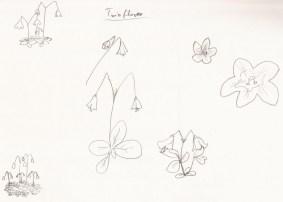 Twin flower study