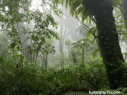 Dżungla.