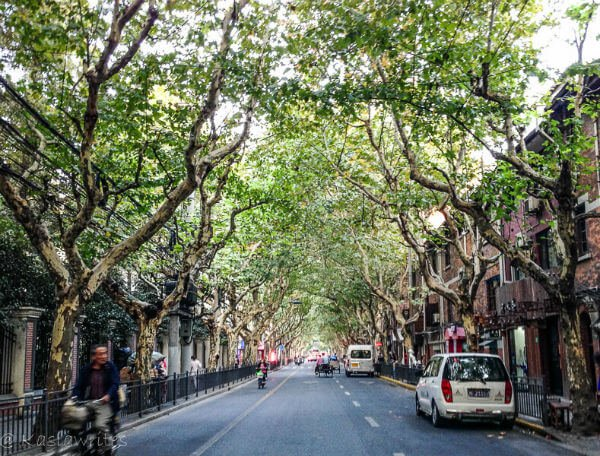 empty street lined with old trees