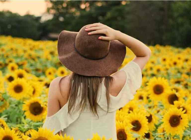 intagramable sunflower fields