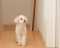 ペットによるフローリングの傷と補修方法