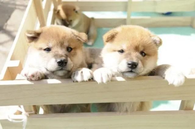 ペットの犬にやさしい対応床材を種類別に確認しよう!