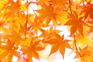 大感謝祭キャンペーン開催中!