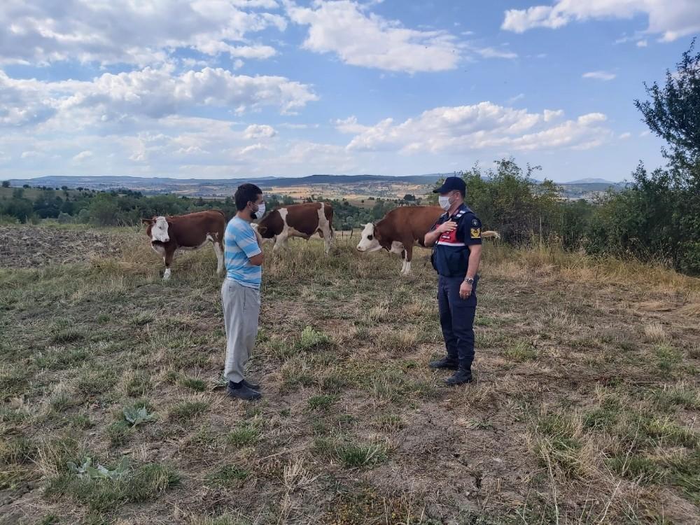 Jandarma, kayıp büyükbaş hayvanları drone ile bulup sahibine teslim etti