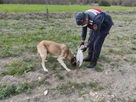 Jandarma sokak köpeklerine sahip çıkıyor