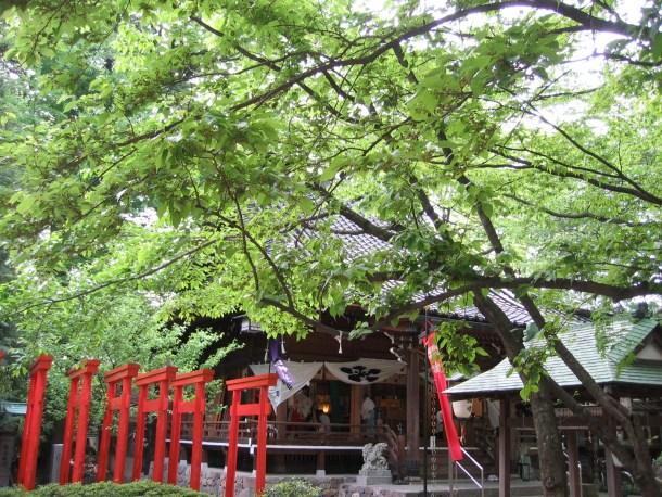 葉の生い茂った境内から拝殿を望む