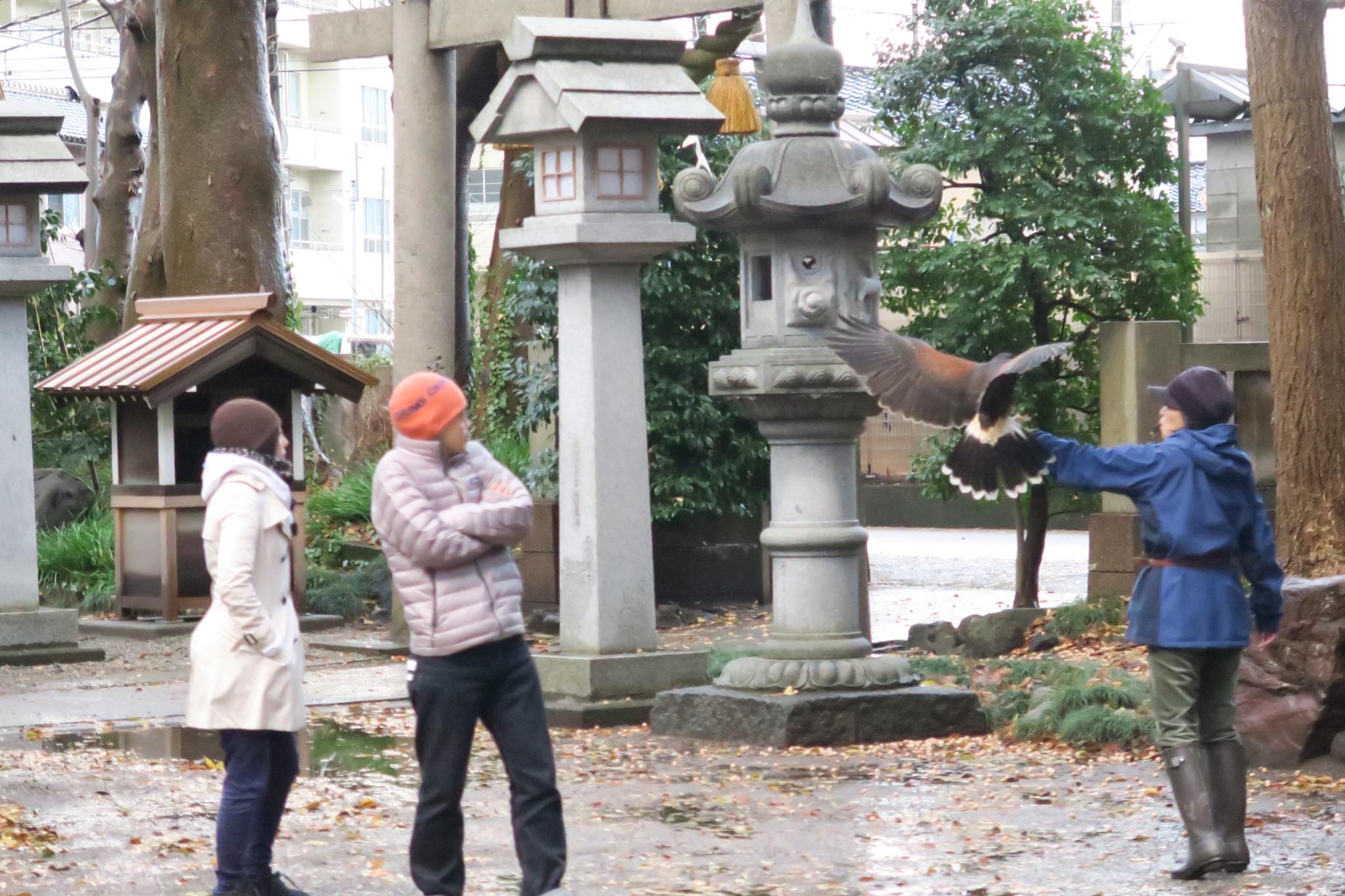 平成29年12月 鷹匠訓練 アイキャッチ