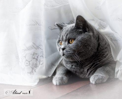 Gezond of ziek: Een gezonde kat is speels en opgewekt