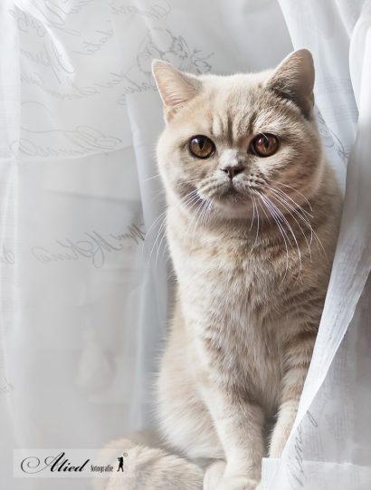 Gezond of ziek: Een gezonde kat heeft een glanzende, schone vacht