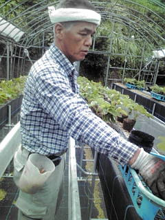 いちごの苗植え 2010-09
