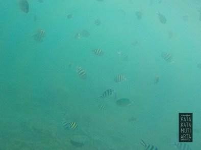 ikan ikan