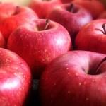 三重県りんご狩り