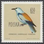 Ptaki chronione w Polsce - 1073