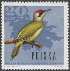 Ptaki leśne - 1571