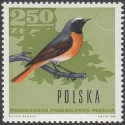 Ptaki leśne - 1575