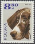 Rasy psów - 1758