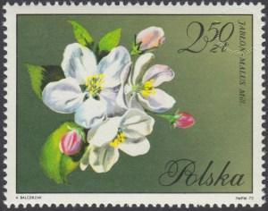 Kwiaty drzew - 1991