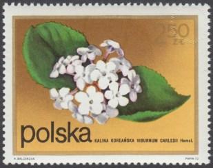Kwiaty krzewów - 2071