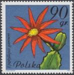 Kwiaty sukulentów - kaktusy - 2636