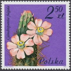Kwiaty sukulentów - kaktusy - 2639