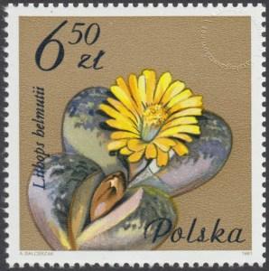 Kwiaty sukulentów - kaktusy - 2642