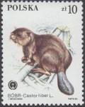 Chronione zwierzęta futerkowe - 2801