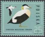 Ptaki - dzikie kaczki - 2854