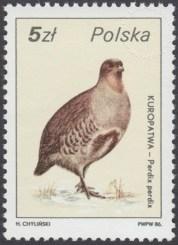 Ptactwo i zwierzyna łowna - 2871
