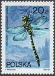 Ważki polskie - 2989