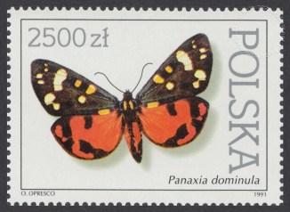 Motyle z kolekcji Instytutu Zoologii PAN w Warszawie - 3199