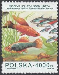 Ryby akwariowe - 3359