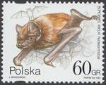 Ochrona przyrody - nietoperze - 3509