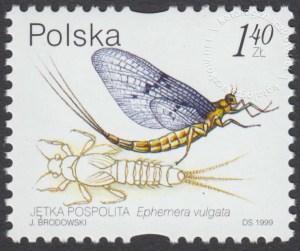 Owady wodne - 3637