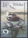 Ptaki - 3930