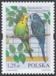 Egzotyczne ptaki hodowlane - 3969