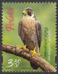 Ptaki Singapuru i Polski - 5022